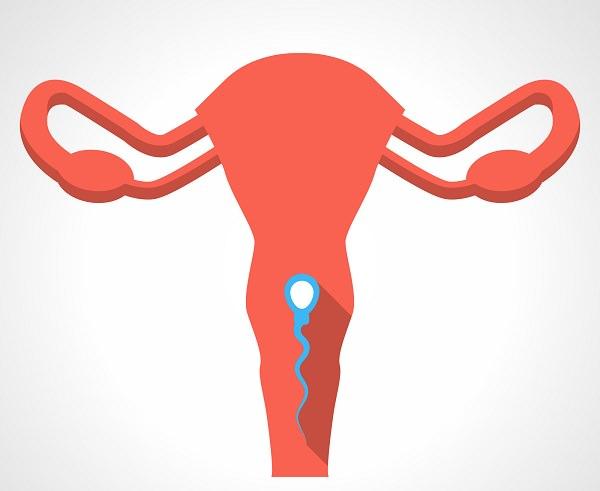 子宮頸管粘液の減少
