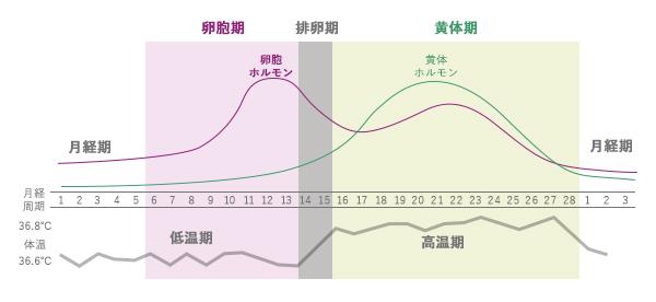 月経周期グラフ
