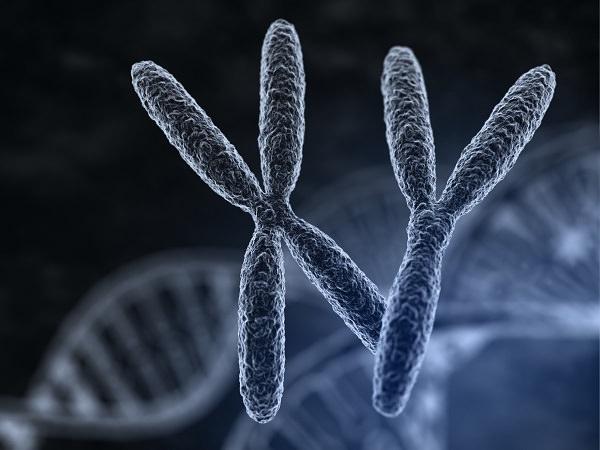 X精子とY精子の特徴