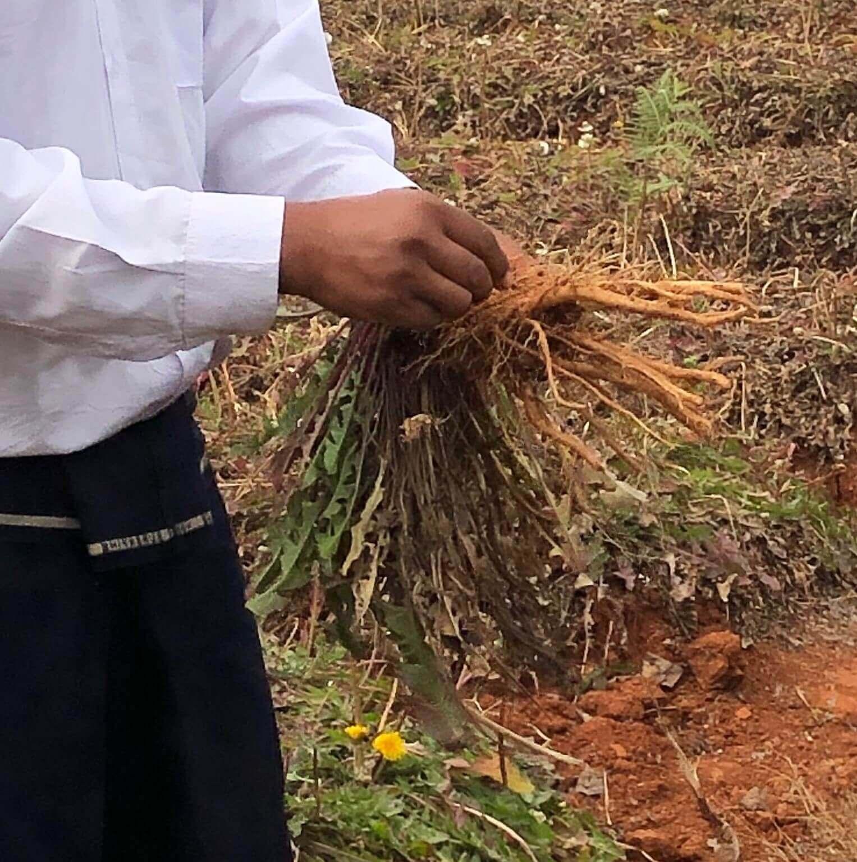 ミャンマーの自社農園で、ハーブティー製造現場の裏側を取材してきました!
